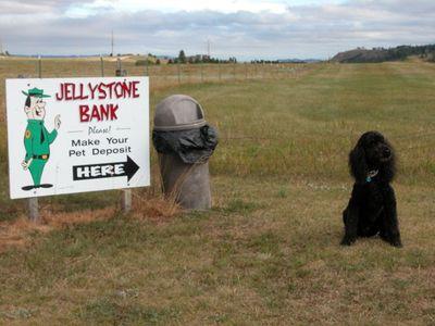 Jellystone%20Miles%20001%20small.jpg
