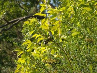 hummingbird%202.jpg